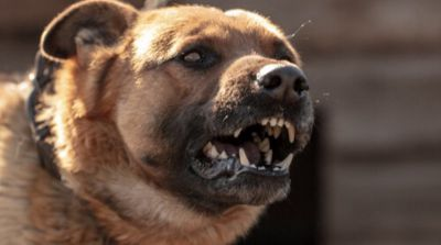 137 mil 940 pesos deberá pagar el dueño del perro que mordió a Joel